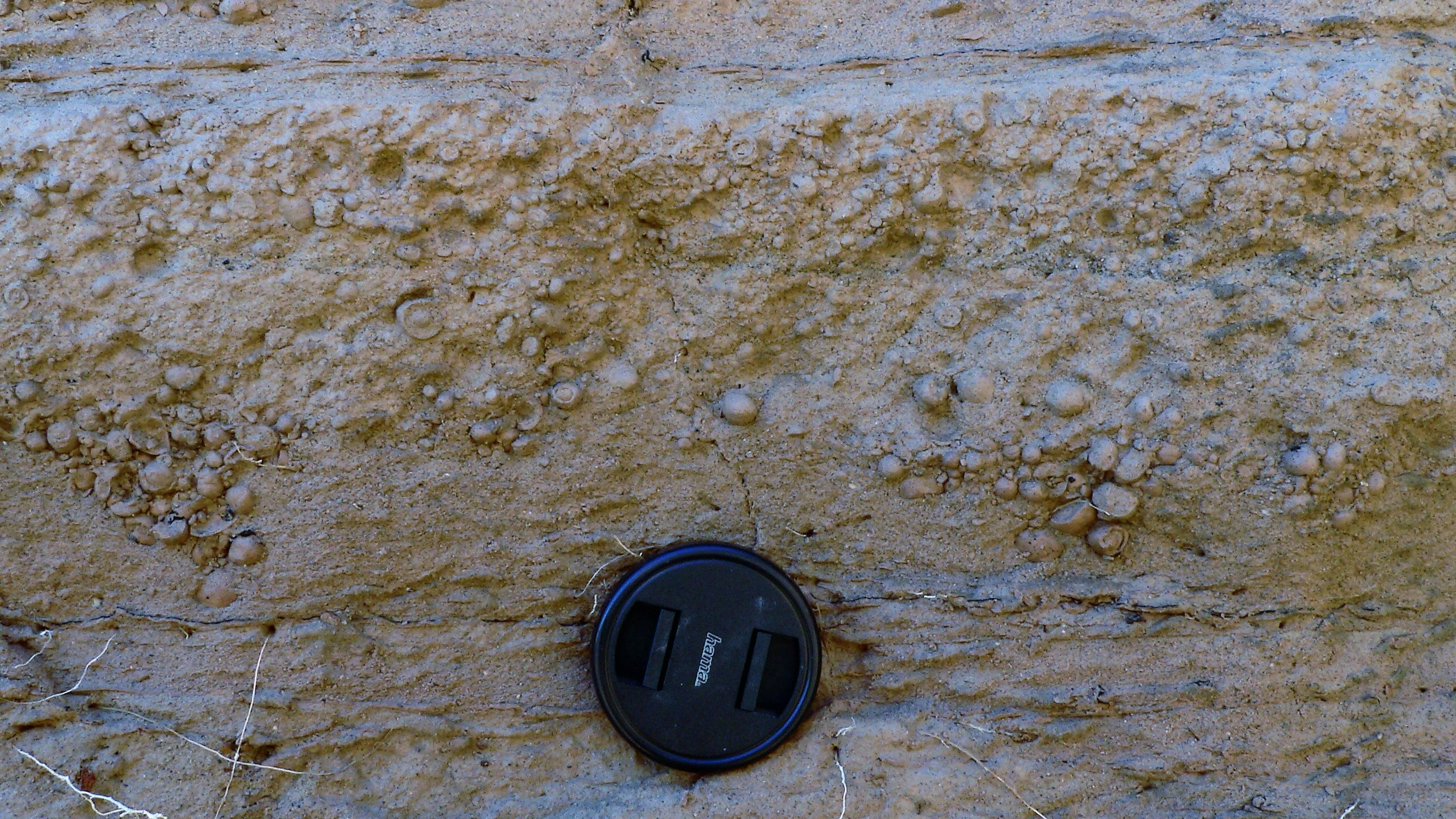 Accretionary lapilli from phreatoplinian air fall deposits, Oruanui eruption, New Zealand